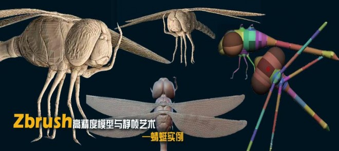 Zbrush 高精度模型与静帧艺术——蜻蜓模型实例