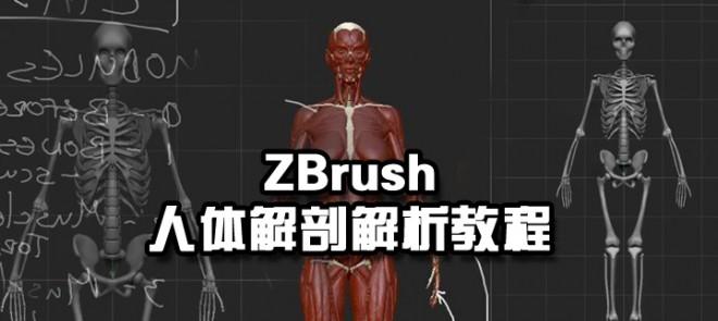 ZBrush人体解剖解析教程