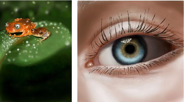 水彩画善于表达追求淡雅效果的画面