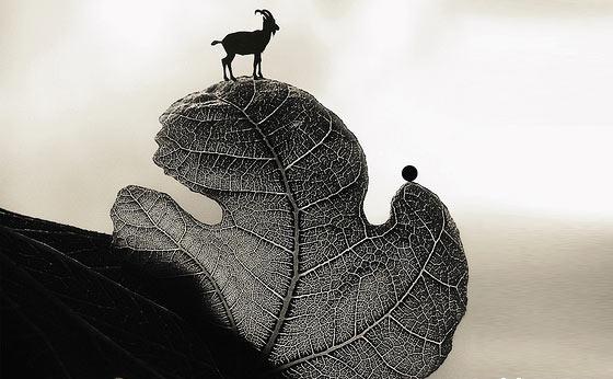 【平面设计】ps制作的奇趣动物作品欣赏一