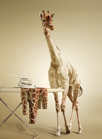 ps动画快速入门a动画蜡烛长颈鹿烫教程衣服图从精通到打造pdf图片