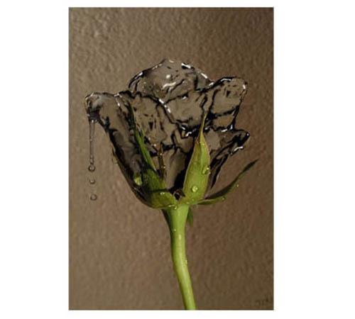 ps合成实例:将玫瑰花制作成液态水状效果