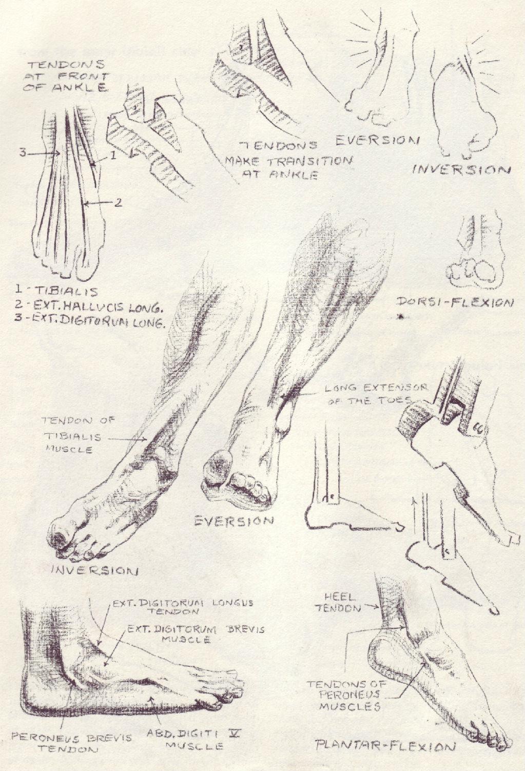 人体结构素材