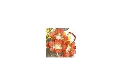 【ps古风素材,ps古风教程_PhotoshopPS制作唯美的「盛花时」古风