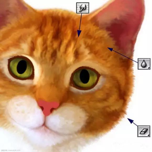 ps绘制立体动物图