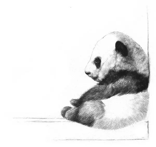 儿童简单步骤熊猫画像
