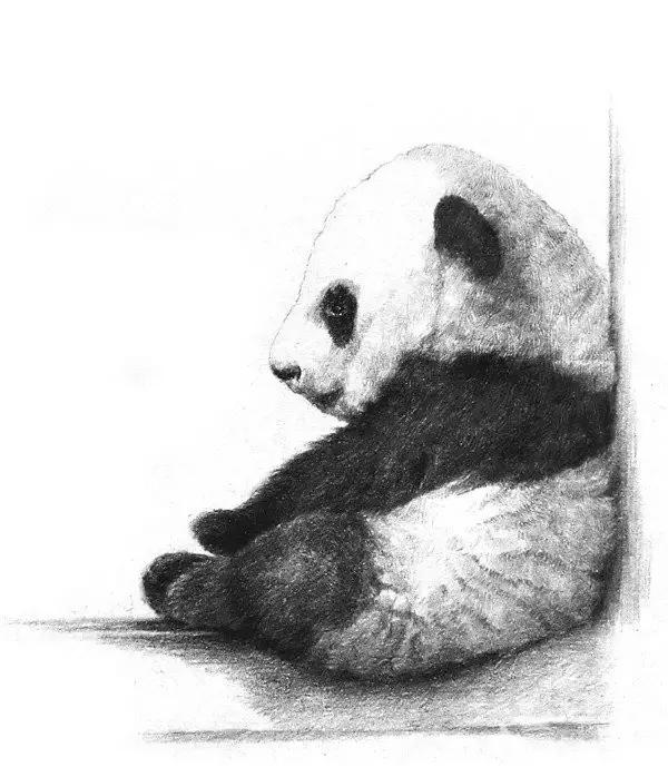 手绘一只熊猫宝宝