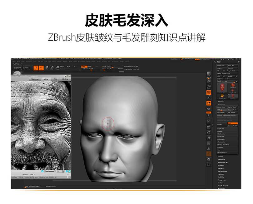 Zbrush皮肤皱纹与毛发雕刻知识点讲解