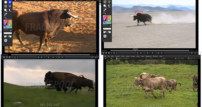 Maya影视动画跑步循环动作制作实例教程收获之了解如何去通过参考资料分析动画