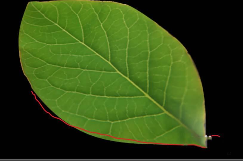 C4D给树叶添加纹理贴图最终案例作品