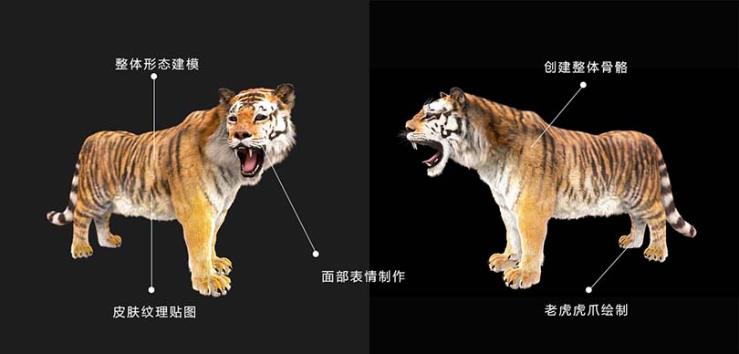 高精度影视动物模型创建注意事项
